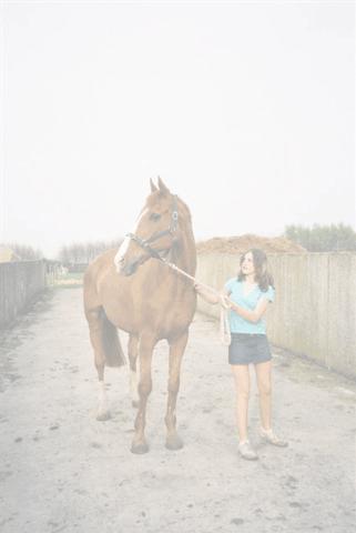 Stichting Manegepaarden Pensioenfonds - In Memoriam 'Duke'