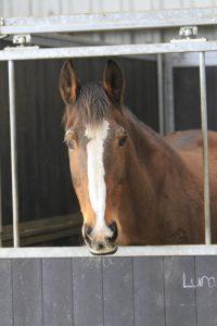 Stichting Manegepaarden Pensioenfonds - 'Luna 2'